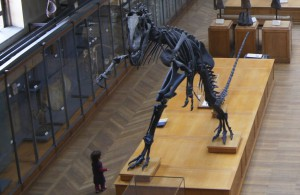 Dinosaur_skeleton,_Museum_national_d'histoire_naturelle,_Paris